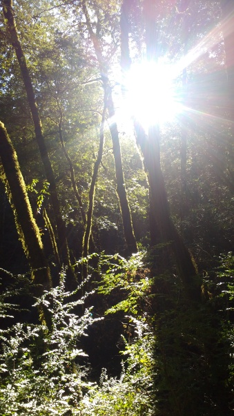 Sunrise in Sinkyone Wilderness, Lost Coast